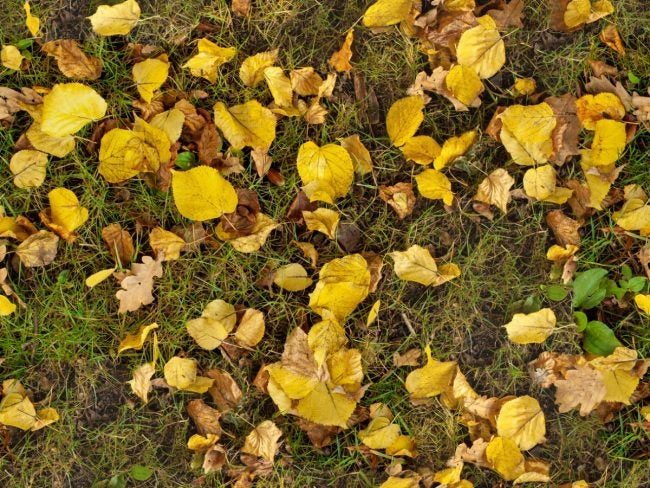 The Best Tips for Mulching Leaves