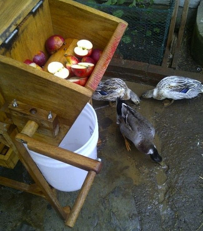 DIY Apple Cider Press - ducks