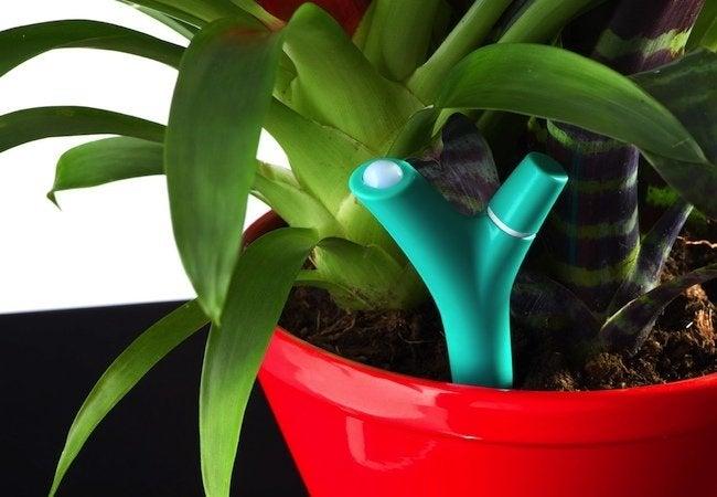 New Smart Home Technology 2015 - Parrot Flower Power