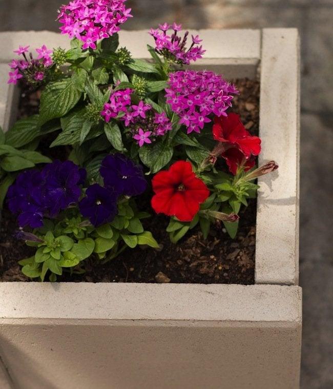 DIY Concrete Planters - finished