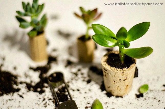 DIY Wine Cork Planter - succulents