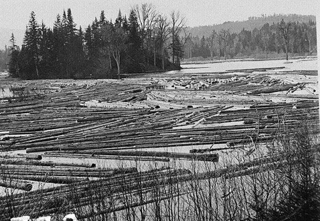 Maine Heritage Timber - Lake