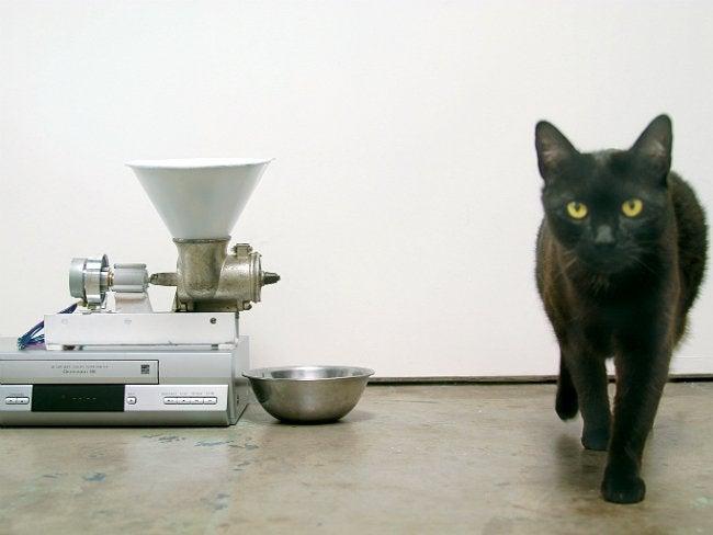 DIY Automatic Pet Feeder