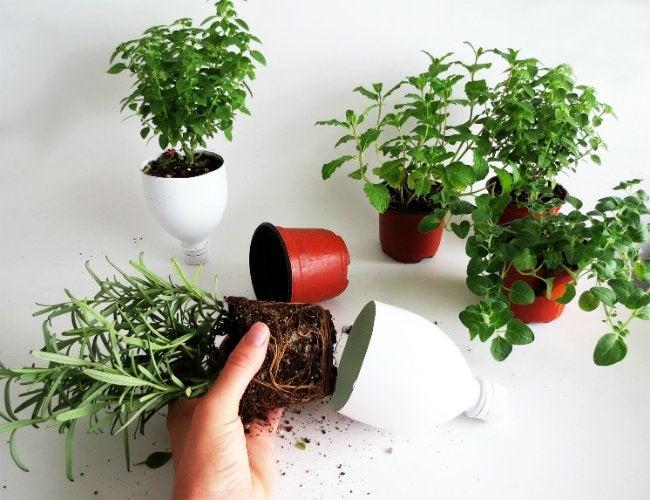 DIY Herb Garden - Step 12
