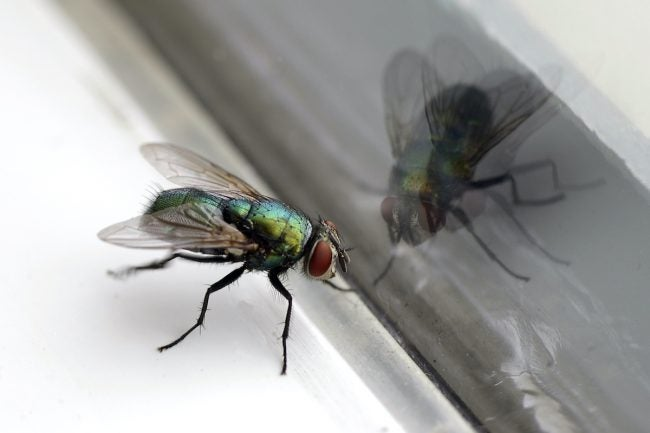 How To Get Rid Of Flies Inside House