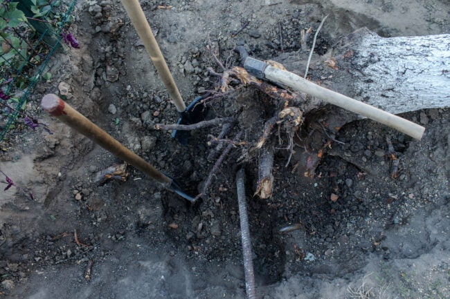 how to kill a tree stump by digging
