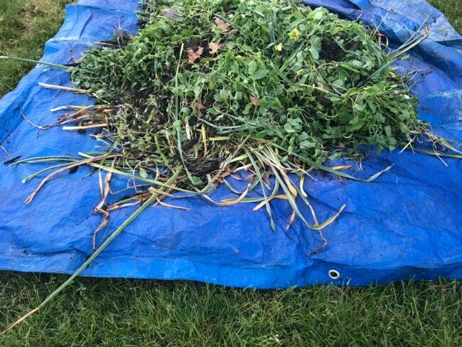 starving tree stump with tarp