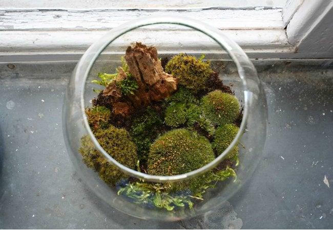 Uses of Charcoal - Grow a Terrarium