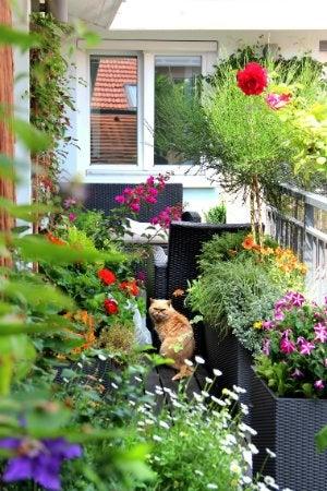 Puppy Proofing - Pet-Friendly Garden