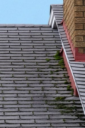 How to Remove Moss from Roof - Beginning Stages