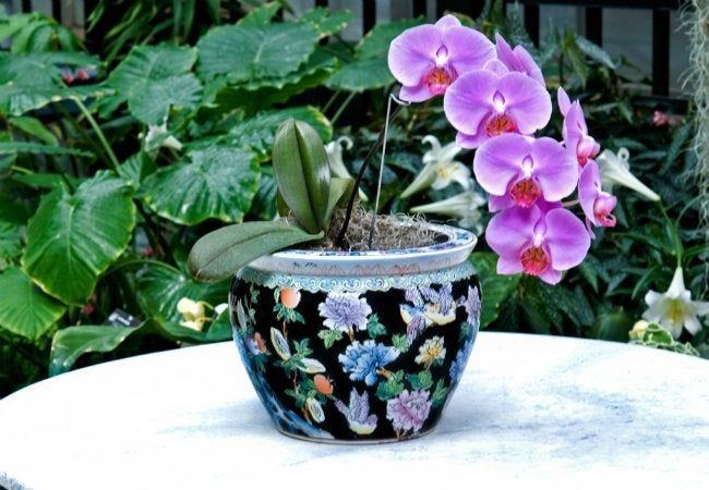 Uses of Ice - Watering Orchids