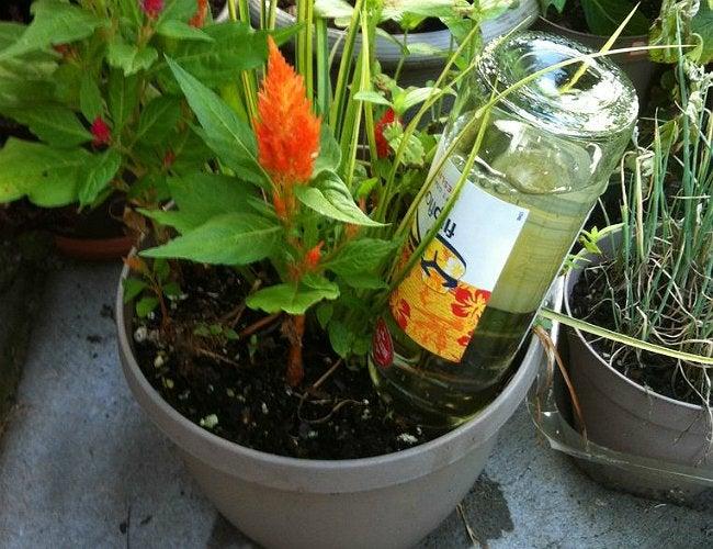 DIY Self-Watering Panter