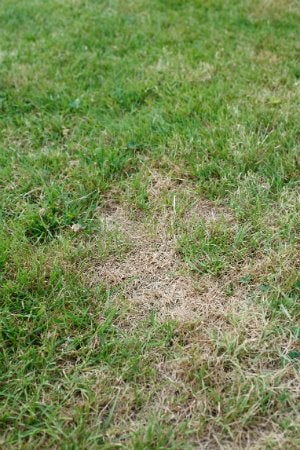 How to Kill Grass - Dry Patchy Lawn