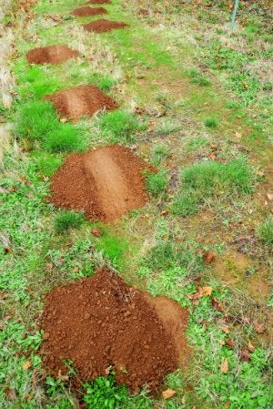How to Get Rid of Gophers - Backyard Mounds