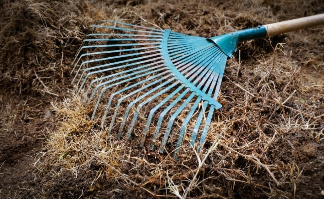 How to Kill Grass - Dying Lawn