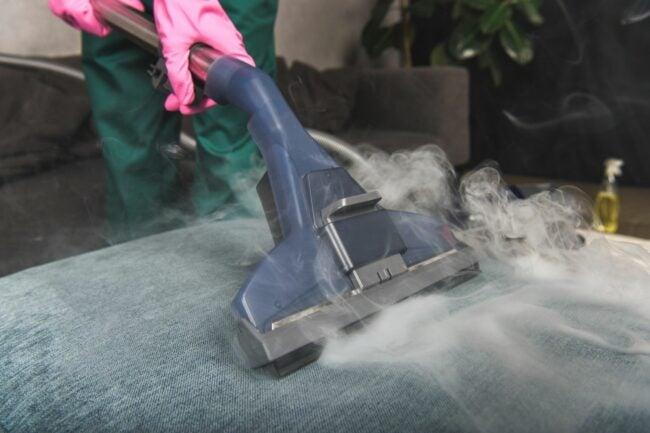 How to Get Rid of Carpet Beetles