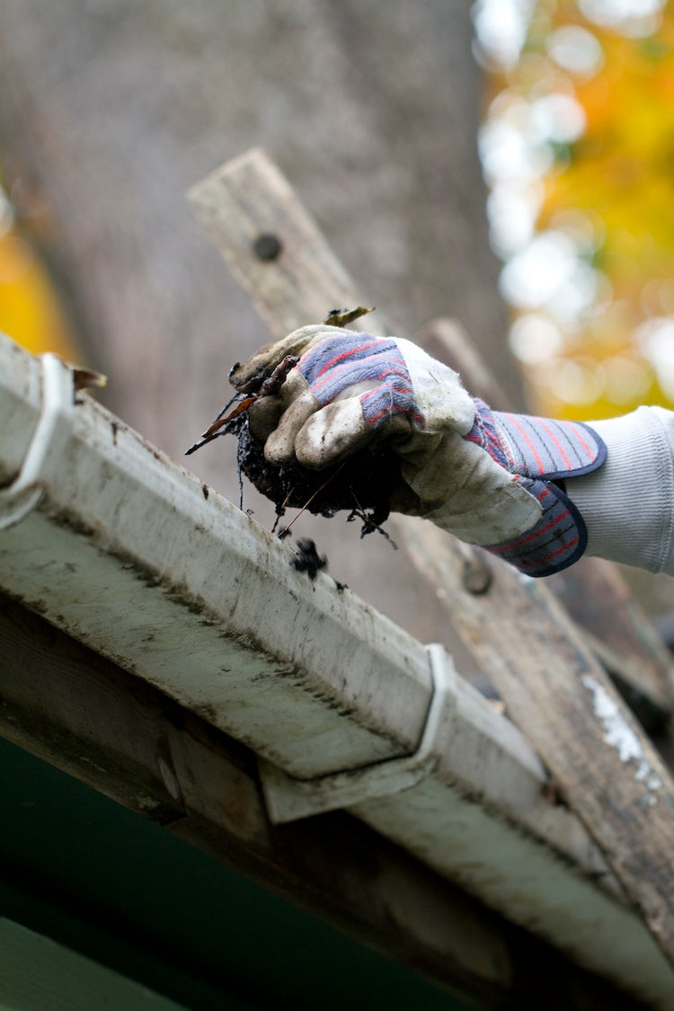 clean gutters to get rid of crickets