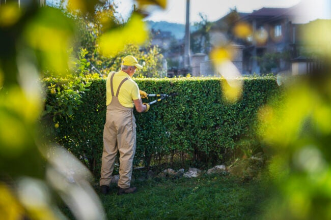 pruning shrubs