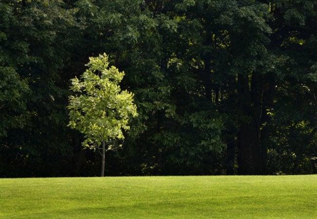 How to Stake a Tree - Backyard Sapling
