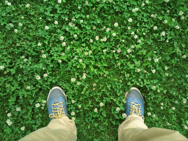 how to kill clover in lawn