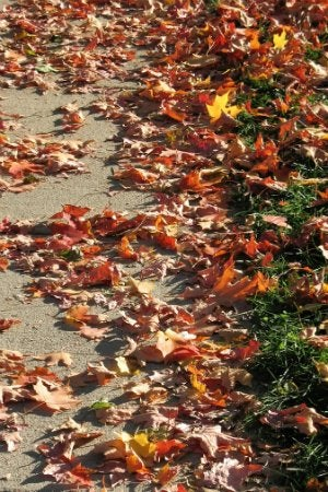 Driveway Cleaning Tips for Removing Leaf Stains
