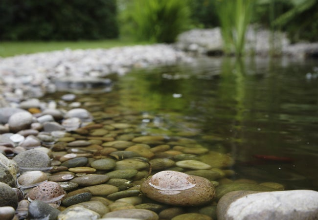 How to Build a Pond in Your Backyard—and Maintain It