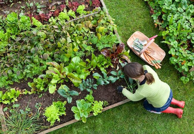 Lasagna Gardening Basics