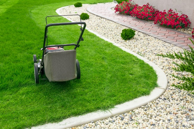 Does Mowing Wet Grass Do More Harm Than Good? The Answers!