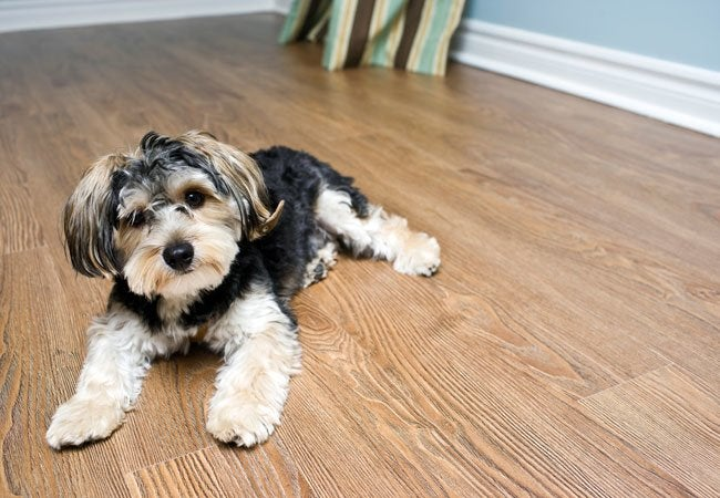 Best Flooring for Dogs – Solved!