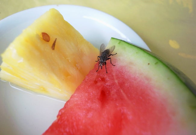 Homemade Fruit Fly Trap
