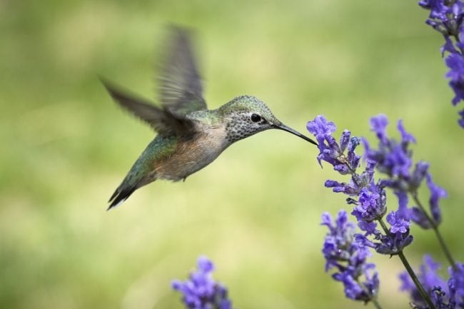 How to Attract Hummingbirds to the Garden
