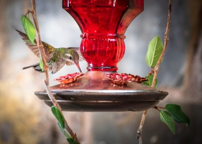 How to Attract Hummingbirds with Feeders