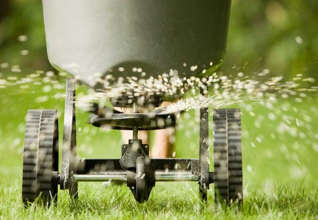 Best Time to Fertilize Grass