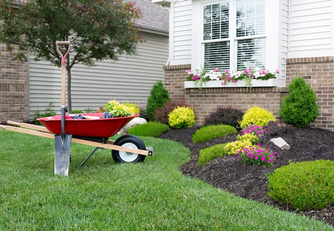 Money-Saving Landscaping Projects