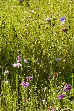 All You Need to Know About Rain Gardens