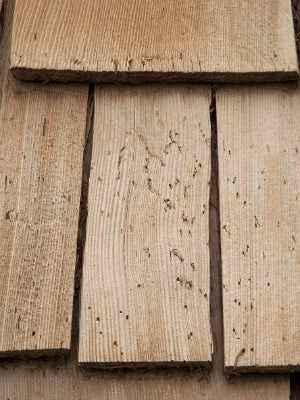 What to Do About Woodpecker Damage on Cedar Shingles