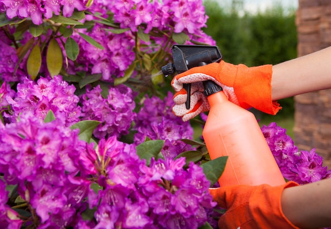 Insecticidal Soaps For Garden