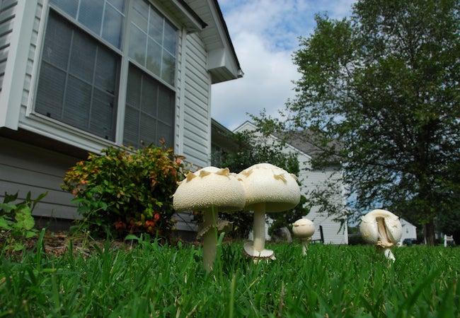Getting Rid Of Mushrooms