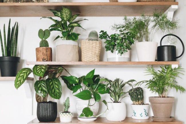 The Dos and Don'ts of Watering Houseplants in Pots with Drainage Holes