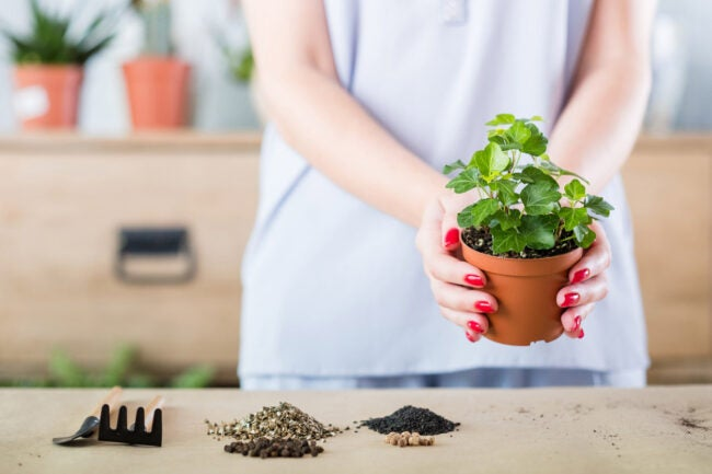 The Dos and Don'ts of Watering Plants Choose the Right Soil