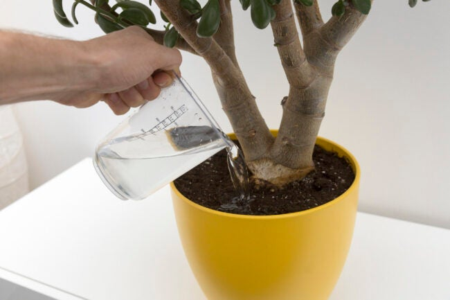 The Dos and Don'ts of Watering Plants Don't Owerwater