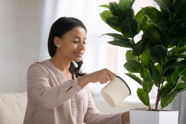 The Dos and Don'ts of Watering Plants Watering Indoor Plants