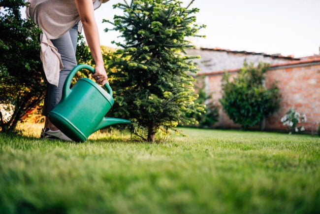 The Dos and Don'ts of Watering Plants Watering Trees