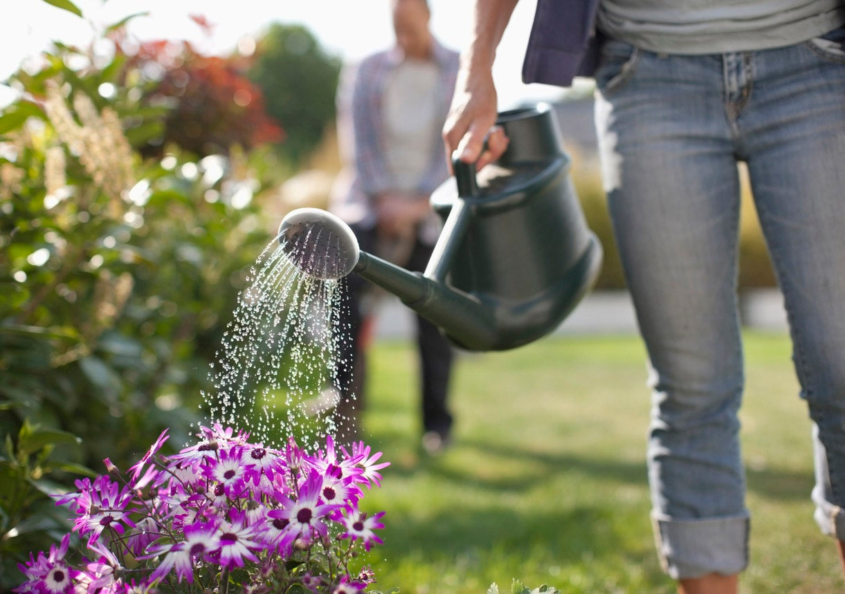 20 Rules for Watering Plants So That You Don't Kill Them