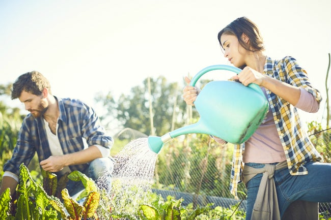Top Tips for Watering Plants