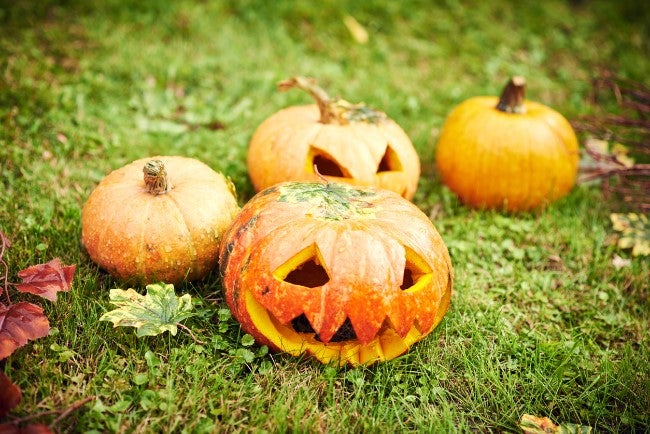 How to Preserve Pumpkins to Last all Fall