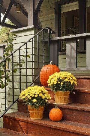 Comment conserver les citrouilles pour qu'elles durent tout l'automne
