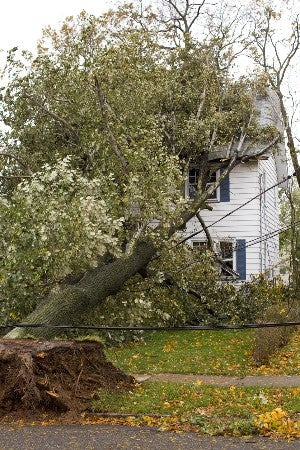 What to Do When a Tree Falls on the House