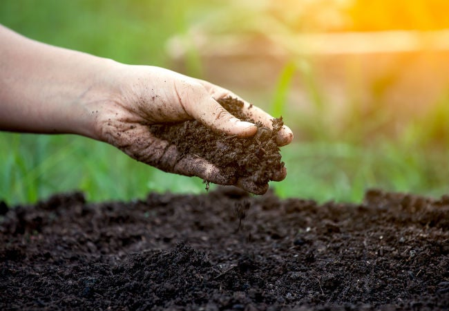 When, Why, and How to Use Compost Tea in the Garden