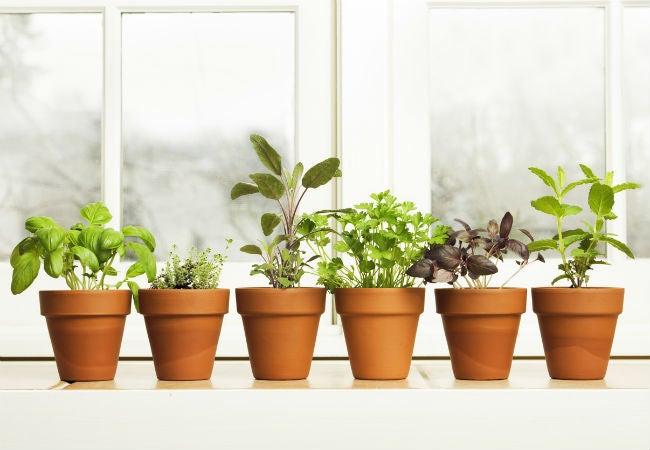 15 Ideas for Better Kitchen Herb Gardens